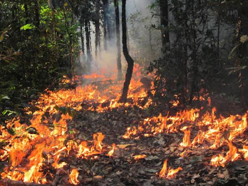 Rainforests on fire: climate change is…