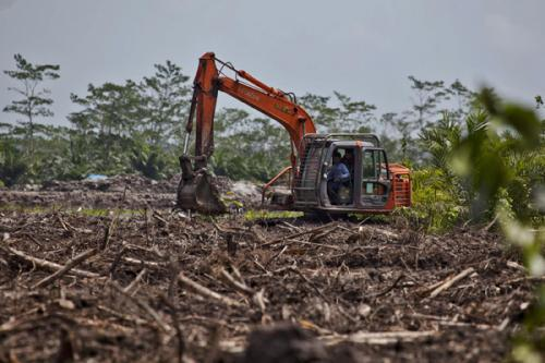 Palm oil company Bumitama under fire for…