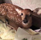 Dog rescues drowning baby deer in the most adorable video youll see today