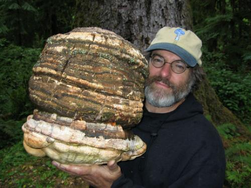 Massive Ancient Mushroom Could Hold the…