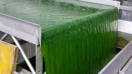 New Technology Transforms Wet Algal…