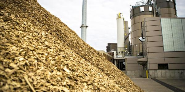 Biomass More Polluting Than Coal, New Study Finds