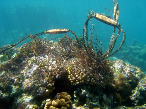 Does fishing make corals sick?