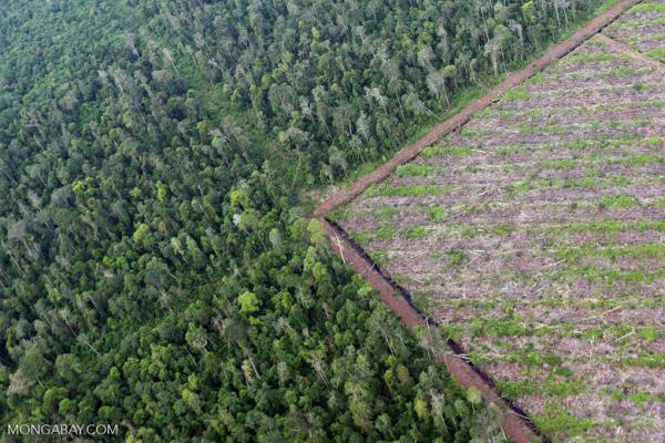 Not just any Wilmar suppliers caught violating no-deforestation policy