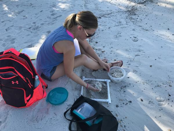 photo image Study shows sea turtle nesting beaches threatened by microplastic pollution