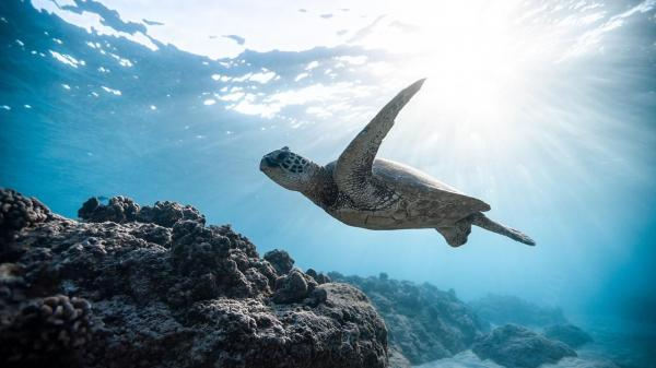 Marine Life Is Fleeing the Equator to Cooler Waters – This Could Trigger a Mass Extinction Event