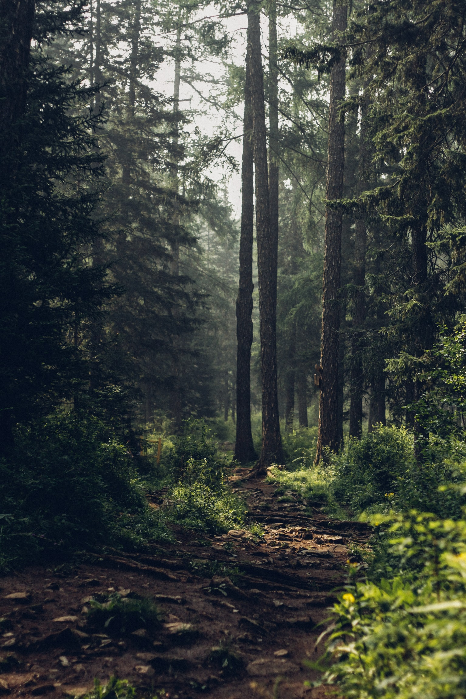 4 Small Changes You Can Make to Battle Deforestation